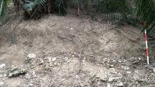 小溪貝塚遺址的貝塚斷面